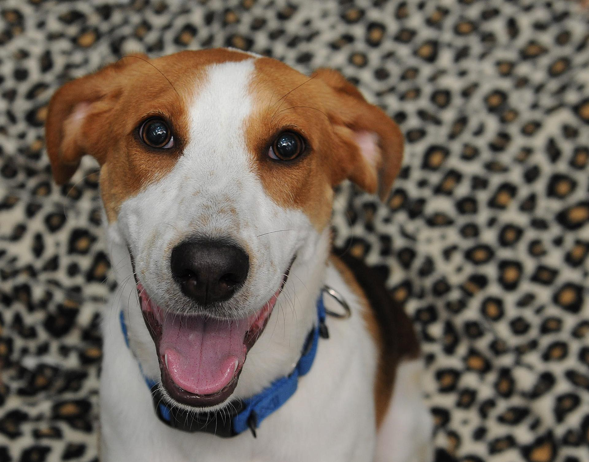 Luther is a six month-old boy looking for the perfect forever home! (HRA)