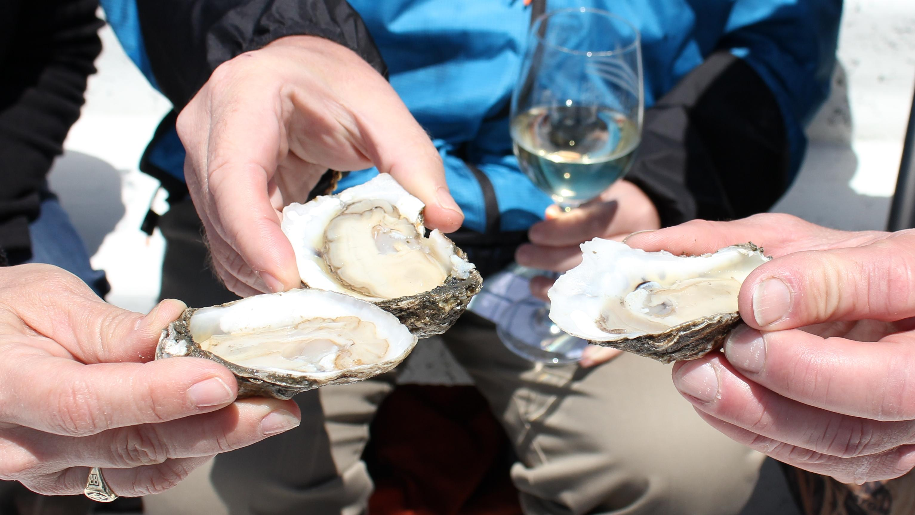 Virginia claims bragging rights to being the largest producer of farm-raised oysters on the East Coast. You'll only be able to experience the flavor profiles and oyster variations if you visit some of the oyster farms, restaurants, and festivals that are especially busy during the fall harvest season. (Image: Courtesy Virginia Oyster Trail)