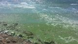 Panguitch Lake closed due to toxic algae bloom