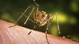 8 mosquito pools in Onondaga Co. test positive for West Nile Virus