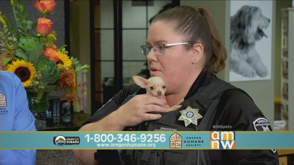 OHS Telethon Big Rescues.png
