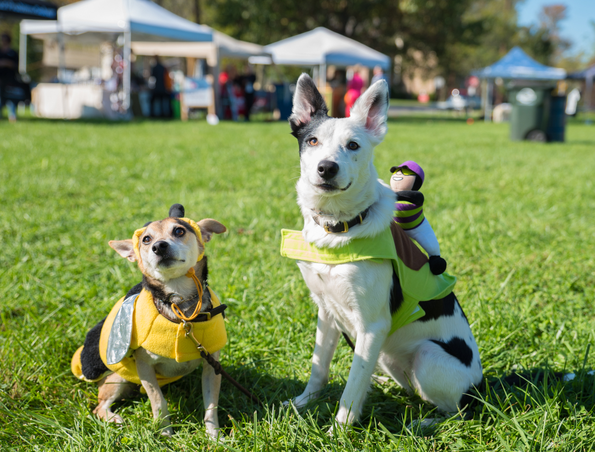 Event: Glendale's Spooky Pooch Festival (10.14.17) / Image: Sherry Lachelle Photography / Published: 11.3.17