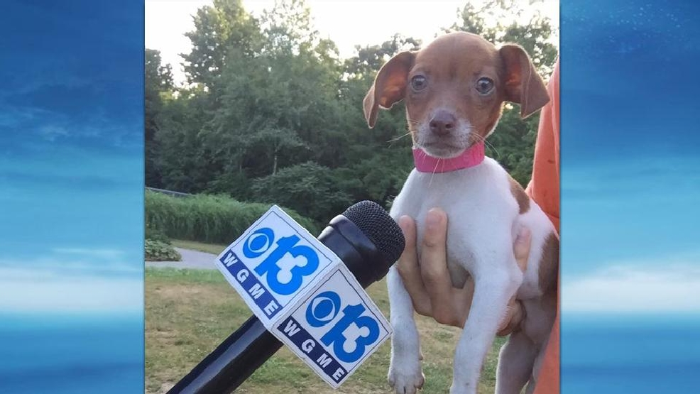 Androscoggin Humane Society >> CBS 13, Fox 23's Pet Food Drive raises over 22,000 pounds of food | WGME