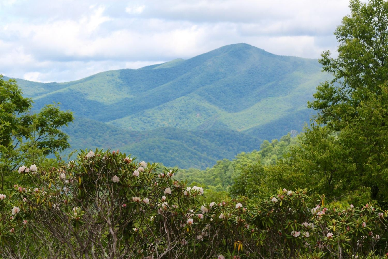 #5 - PISGAH NATIONAL FOREST, NORTH CAROLINA (Distance from Downtown Cincy: approx. 6.5 hours) / Image: Jen Seiser