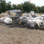 Hundreds of vehicles and items up for grab at Clark County Surplus Auction