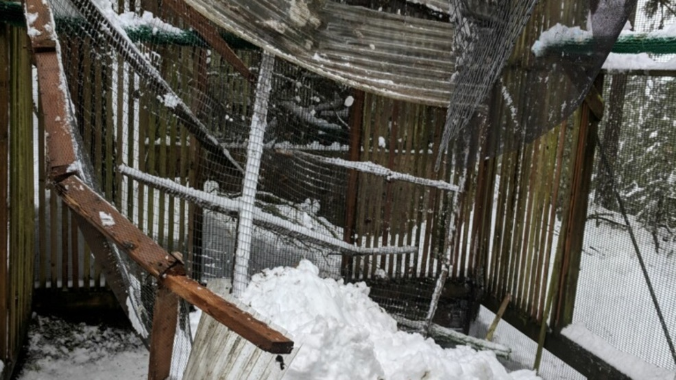 Cascade Raptor Center to close for repairs after heavy snow causes damage