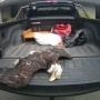 Bald Eagle found dead near Brookings with its talons cut off