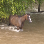 PHOTOS: Horse rescued from flood waters near College Station