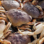 Commercial fishing of Dungeness crabs hit with another delay