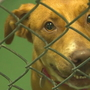 35 dogs, cats arrive at Lynnwood shelter from Memphis, some up for adoption by end of week