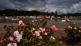 Fisherman's Memorial Rose Garden and Winchester Bay | PHOTOS
