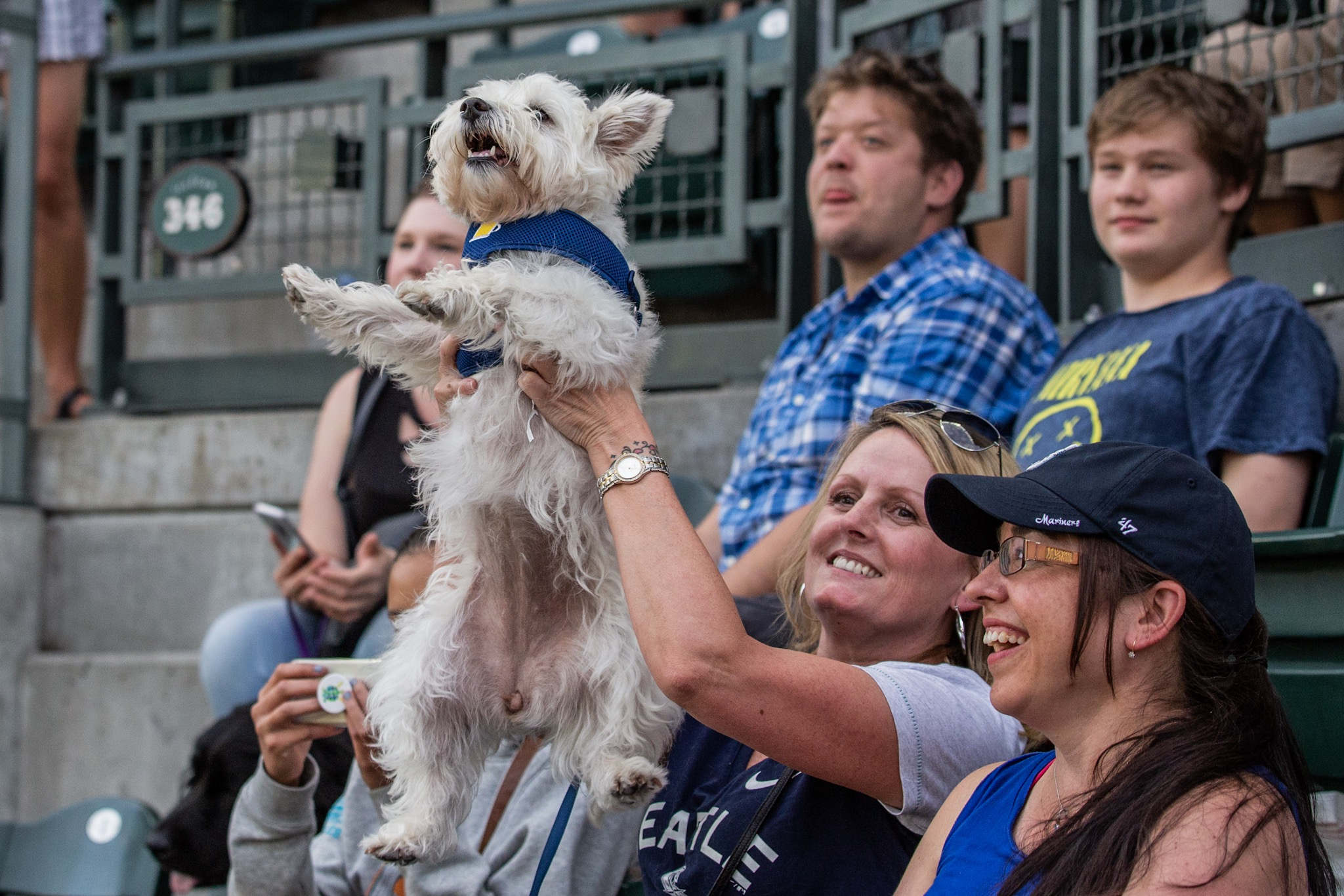 The second 'Bark at the Park' of the season did not disappoint! Mariners fans were allowed to bring their dogs to the game to enjoy the sun, some baseball, and man's best friend. The next Bark at the Park game will be September 5, against the Orioles . (Sunita Martini / Seattle Refined){ }
