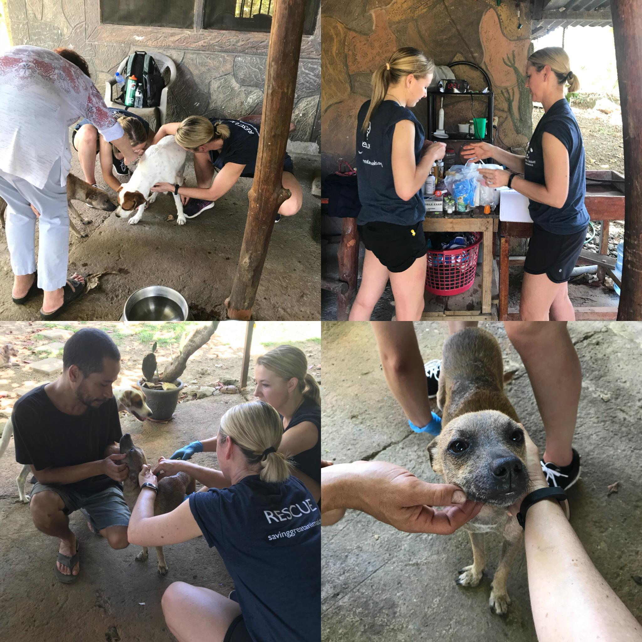 Saving Great Animals was invited to visit a remote village in Costa Rica to bring help to about 32 dogs in need of medical care.  (Image courtesy of Saving Great Animals).