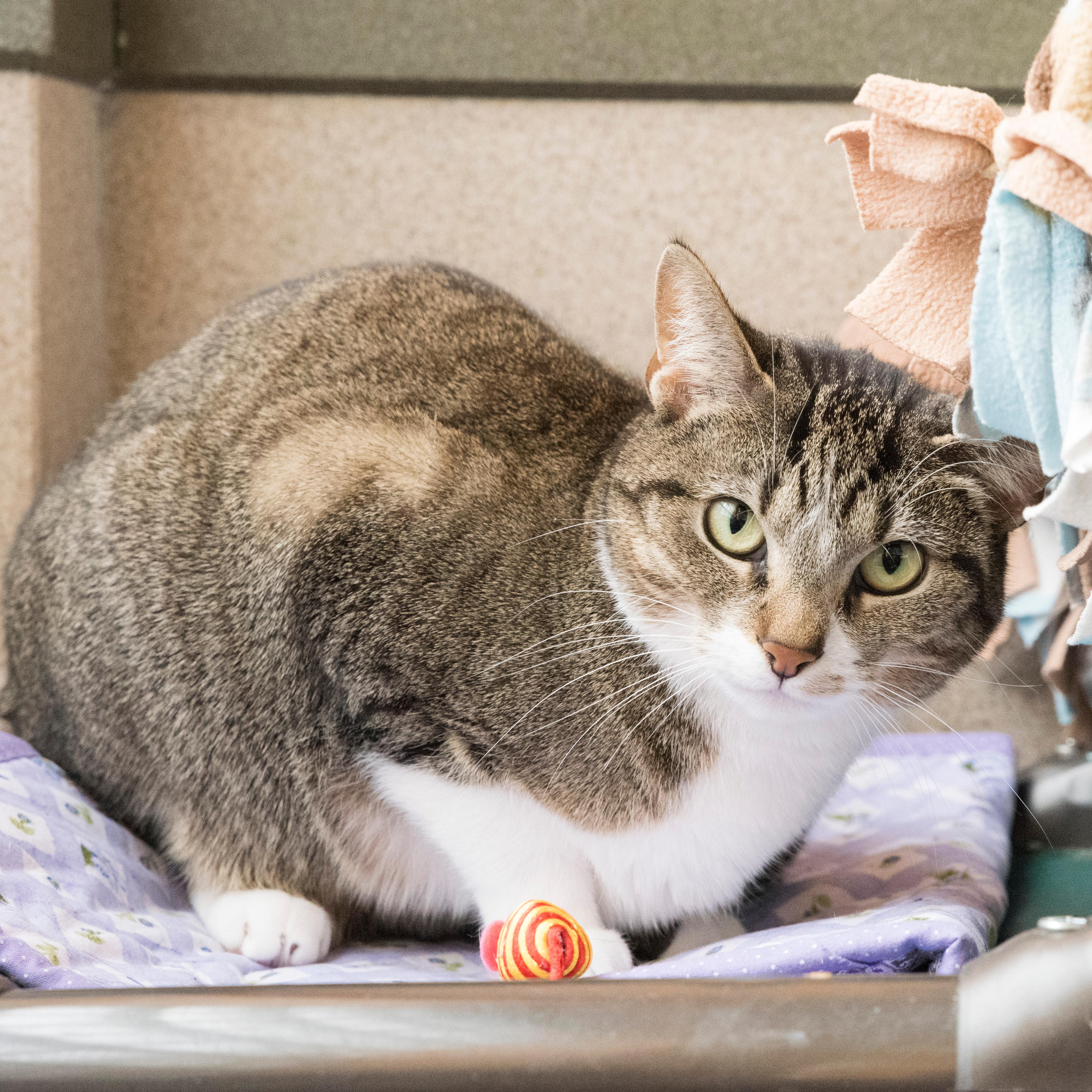 Missy is an independent lady, who likes to be the boss, but if you're patient and let her come to you, she'll reward you with love and affection. (Image: Courtesy HRA)