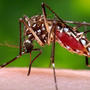 Second case of Zika confirmed in El Paso area