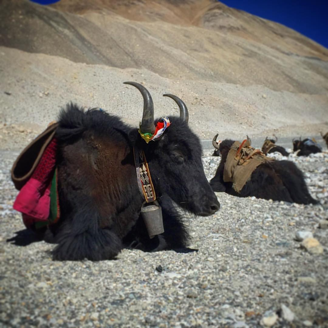 Yak pack for journey to advanced base camp.