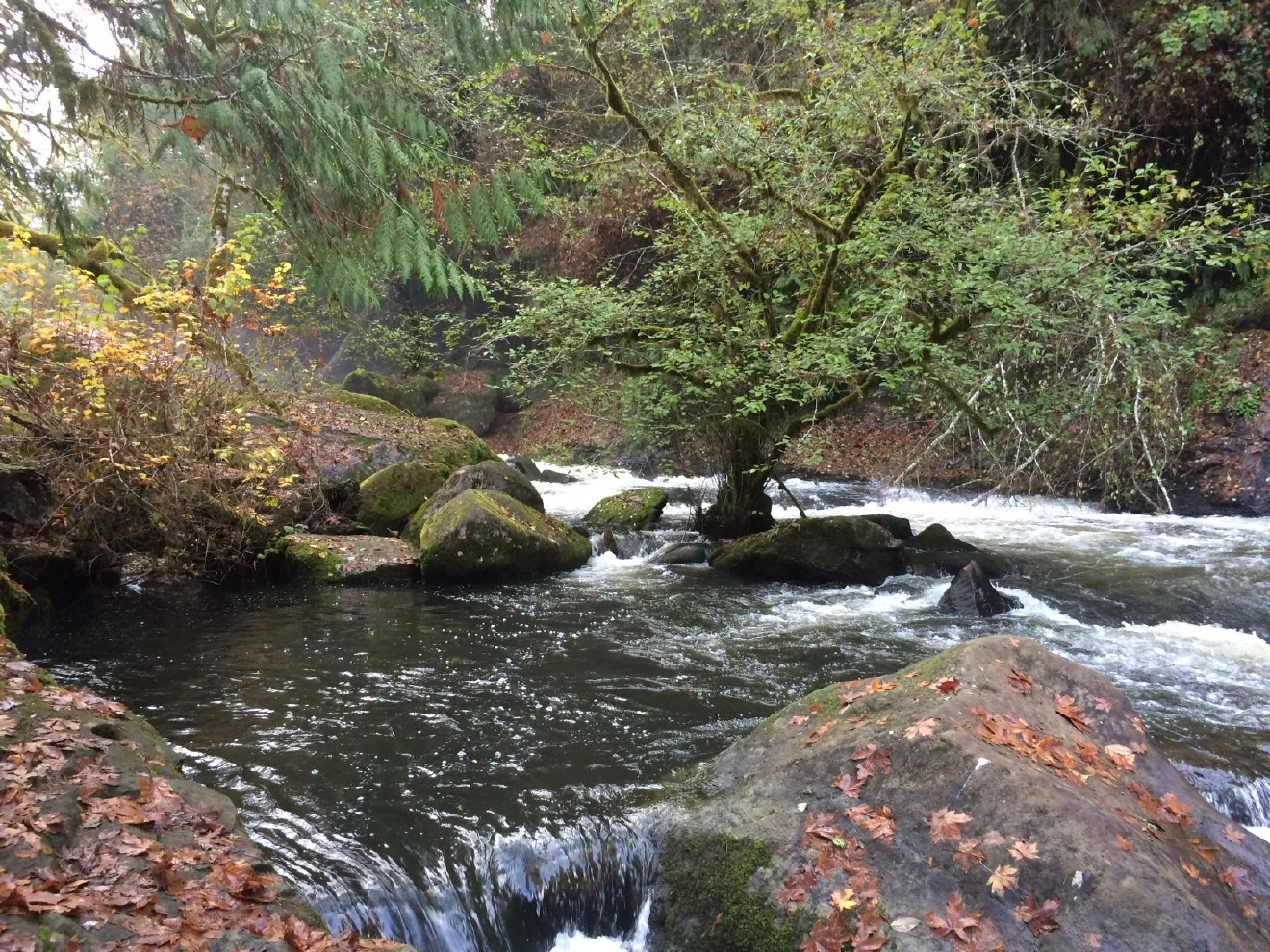 "Lake Creek Falls near Triangle Lake offers visitors the opportunity watch salmon and steelhead attempt to jump a waterfall (or take the ""easy"" route up a fish ladder). (SBG)"