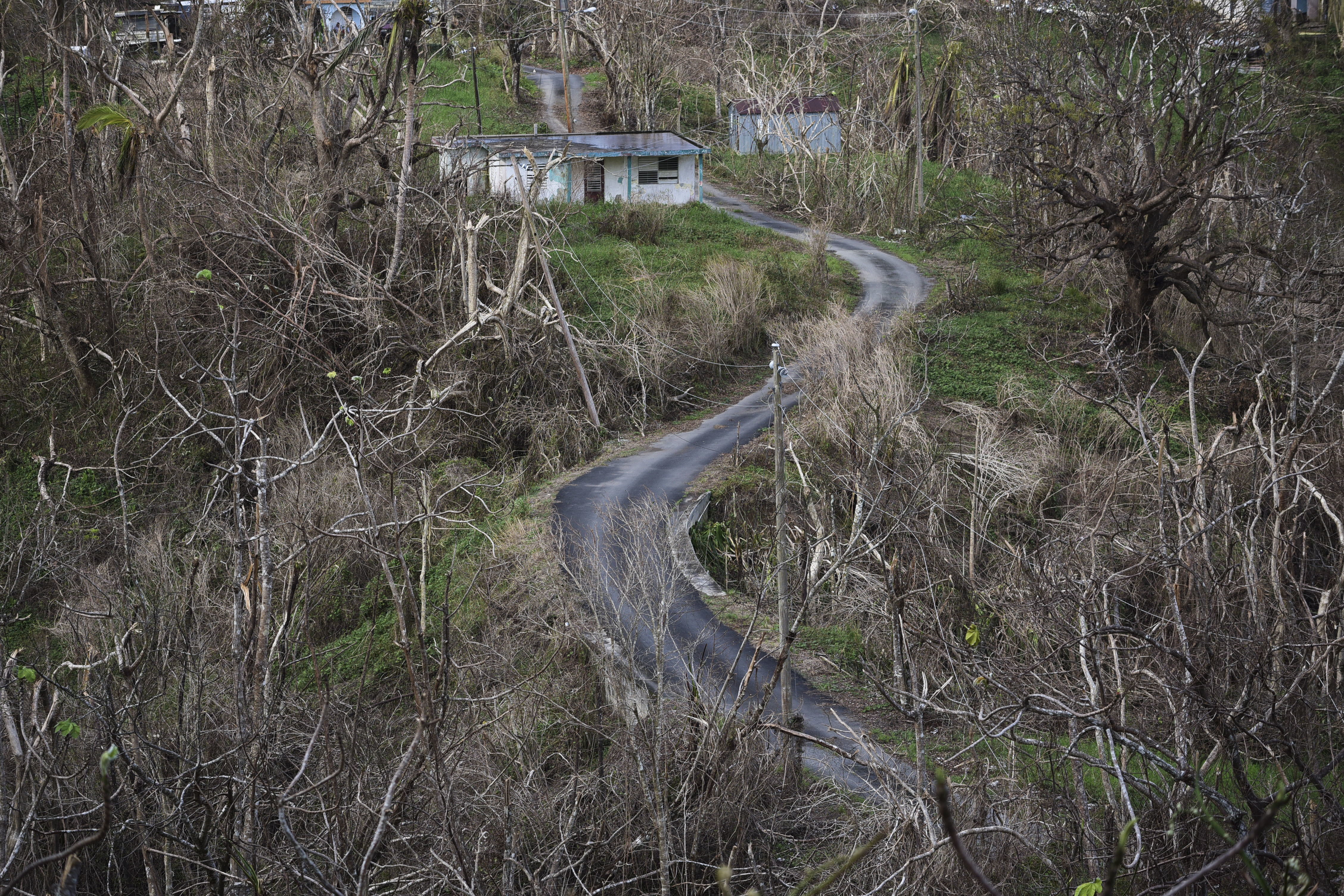 Trees stand barren in the aftermath of Hurricane Maria along a road in Montones Cuatro in the Piedrazul sector of Las Piedras, Puerto Rico, Monday, Oct. 2, 2017. Power is still cut off on most of the island, schools and many businesses are closed and much of the countryside is struggling to find fresh water and food. (AP Photo/Carlos Giusti)