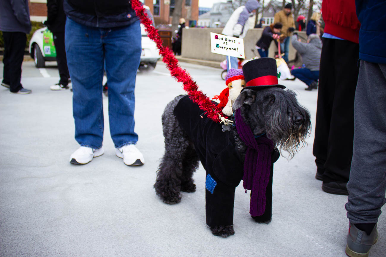 Bah humbug! Dog Cratchet and Terrier Tim came out to spread Christmas cheer{ }/ Image: Katie Robinson // Published: 12.9.18