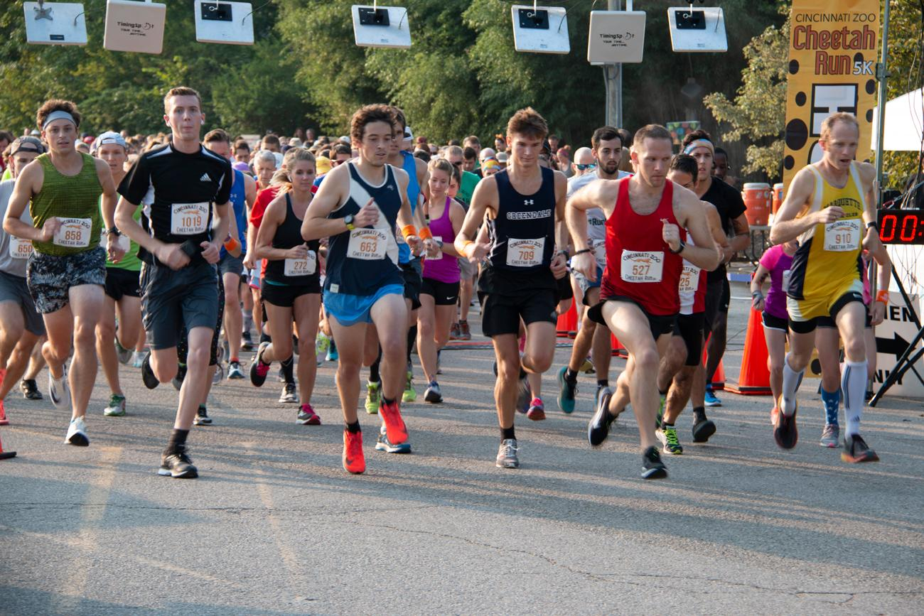 On the morning of Sunday, August 26, the 39th annual Cheetah Run 5K was held at the Cincinnati Zoo. The 3.1-mile course snaked around animal enclosures, headed outside and around the perimeter of the zoo, then came back inside for the finish in the northern parking lot. Proceeds from the race directly benefitted the zoo. / Image: Dr. Richard Sanders // Published: 8.27.18