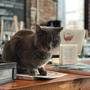 PURR-FECT ENDING | Baltimore brewery cat is back