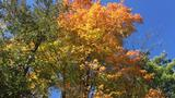 It's leaf-peeping season in Door County