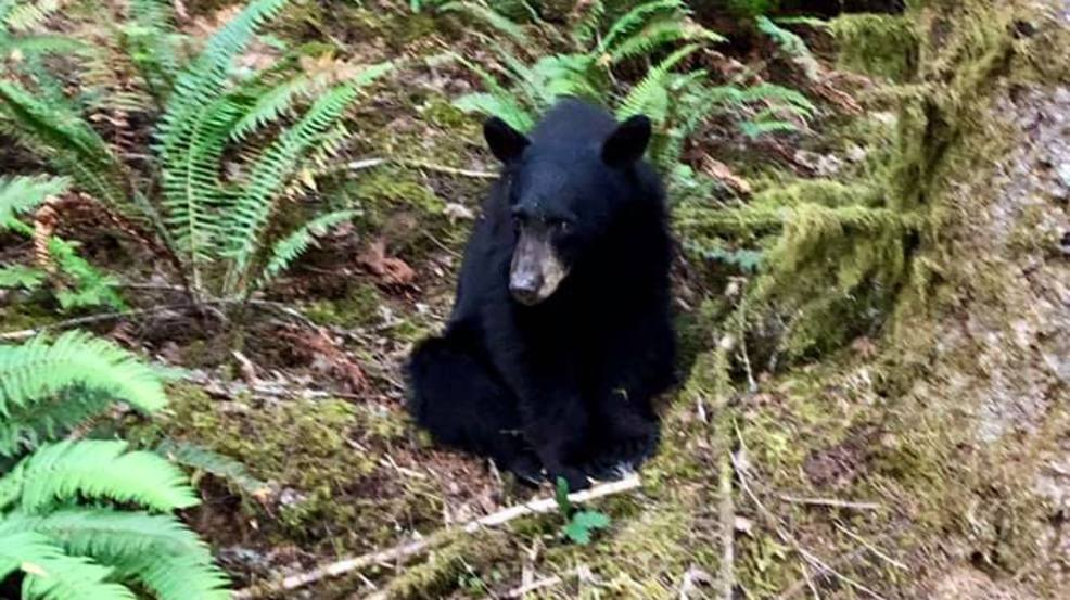 Evidence Bears Out Congressional Intent >> Friendly Bear Euthanized In Oregon Wtvc