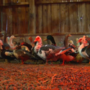 More than 200 birds rescued after Johnson County animal welfare investigation