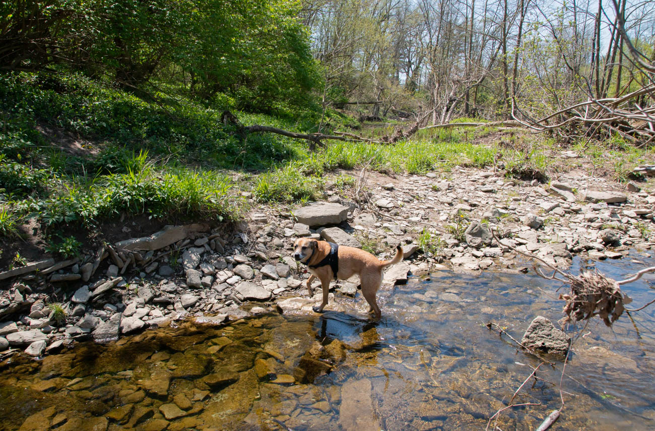 While the walking trails are flat, they can be muddy after a good rain. Several paths lead down the banks into the creek, which is a great spot for skipping rocks, discovering fossils, and taking your kids and four-legged family members. / Image: Elizabeth A. Lowry // Published: 5.12.20