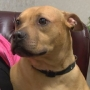 Animals in former Quincy city shelter surrendered to Homeward Bound Waggin, Inc.