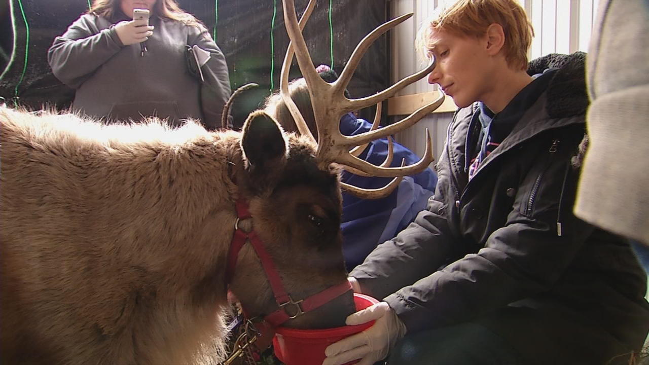 For an additional fee, guests can have a live encounter with the reindeer monitored by zoo staff. (WCHS/WVAH)<p></p>