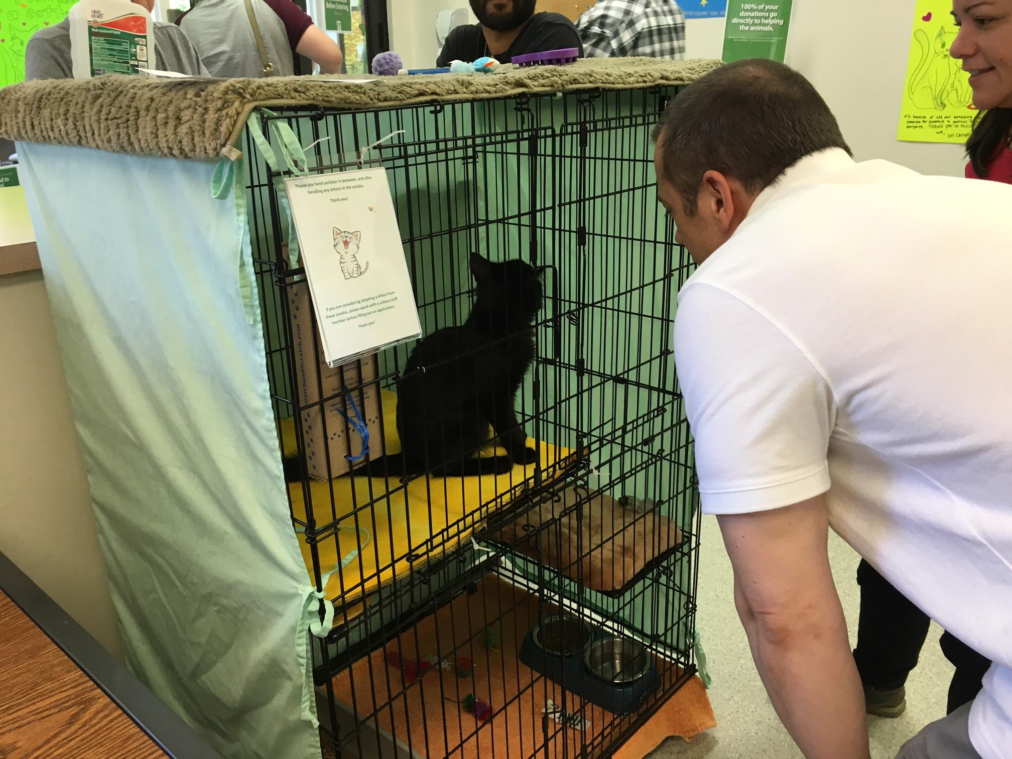 A visitor at Greenhill Humane Society interacting with a cat. (SBG)