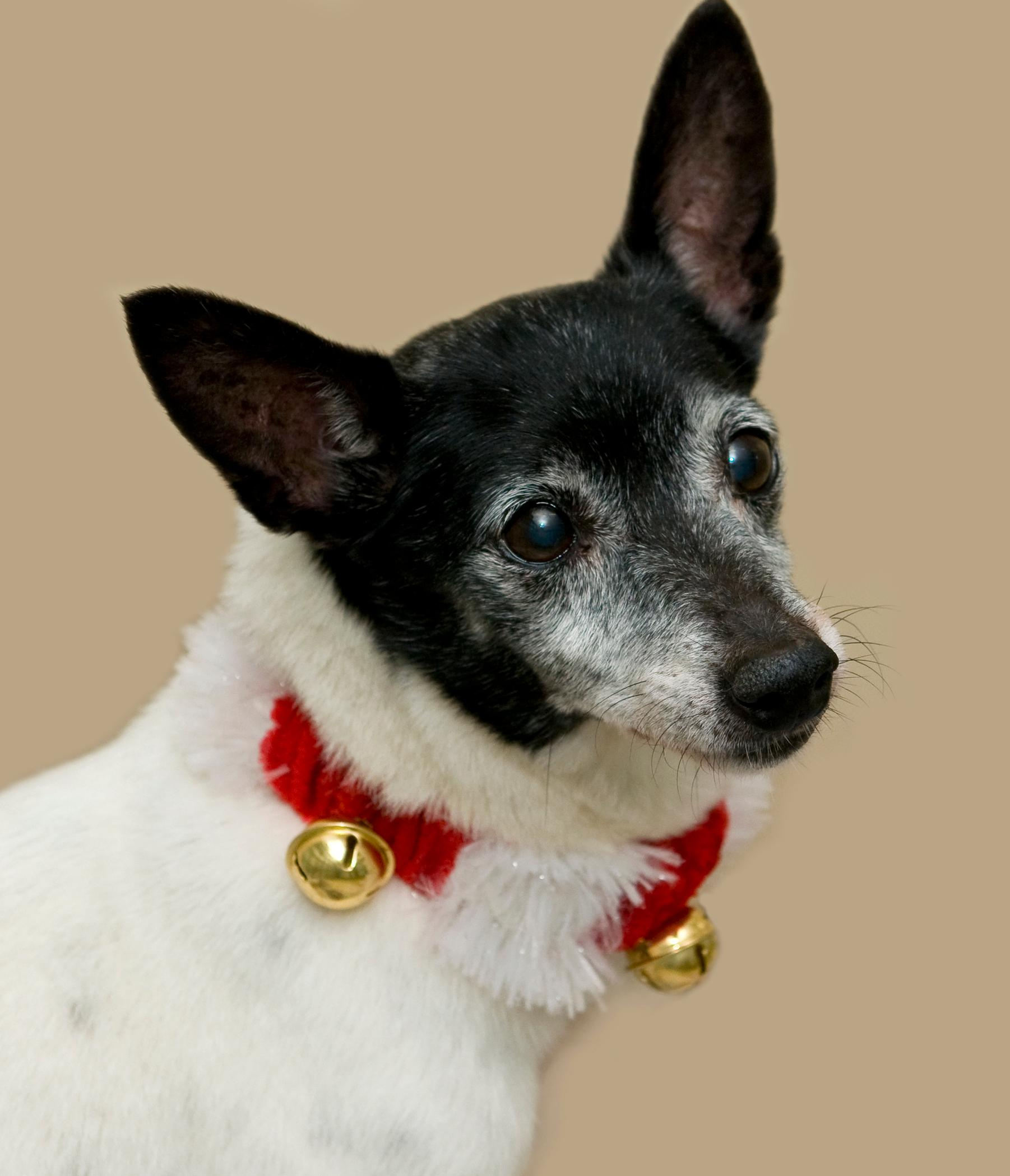 Bruno is available for adoption at the Humane Rescue Alliance (HRA)<p></p>