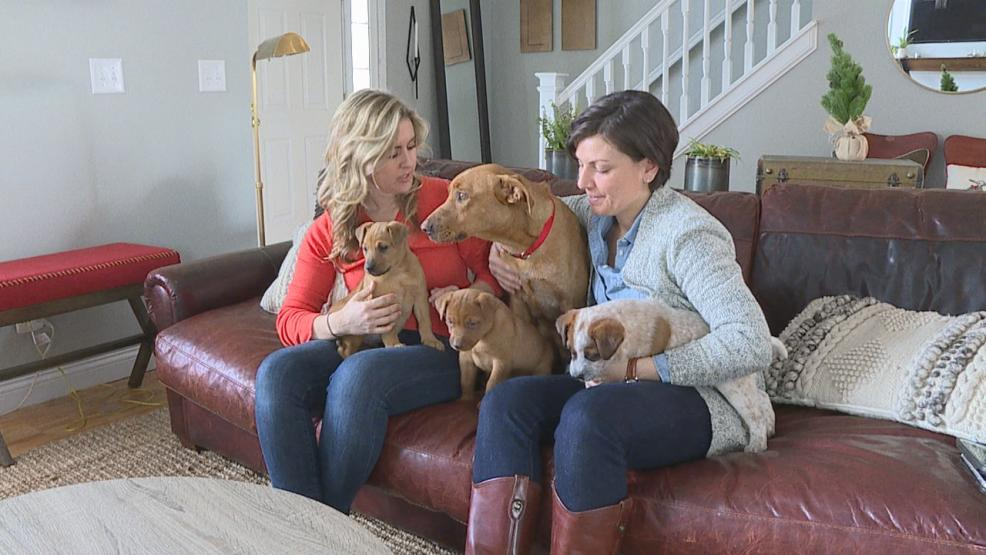Two Central Ohio women driving home from Indiana spotted a dog trying to eat roadkill on the side of the highway, then found her three puppies in a nearby creek (WSYX/WTTE)