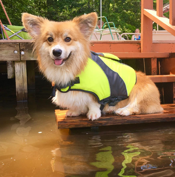 IMAGE: IG user @moogle_the_fluffy_corgi / POST: Wet dog is a happy dog #LakeLife #aquadog #TOT