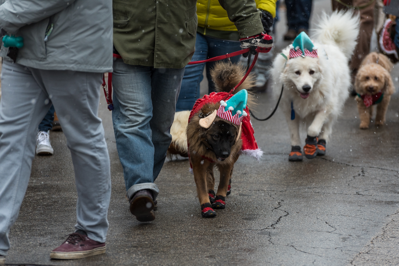 The Reindog Parade was held on Saturday, December 9th in Mt. Adams. Costumed dogs took to the streets with their human counterparts to walk in a procession, and judges give out awards to for their favorite participants. The proceeds to enter the parade were donated to SPCA Cincinnati. / Image: Mike Menke // Published: 12.10.17