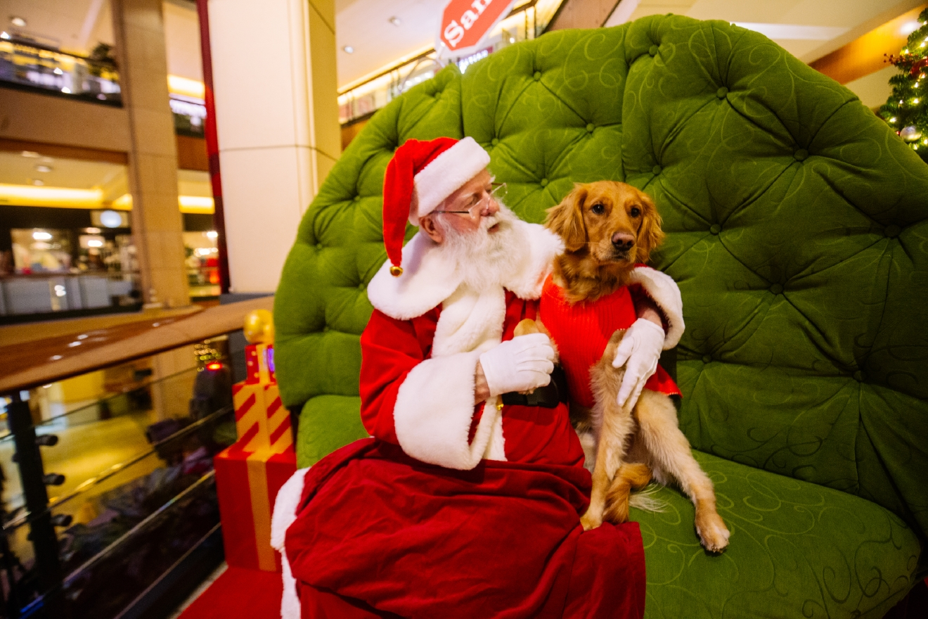 We really do love animals here at Seattle Refined. From festive corgi walks around Green Lake, wiener dog races, to sea otters playing with pumpkins at Woodland Park Zoo, we love it all. Here are our favorite animals and photos of them from 2016. (Image: Joshua Lewis / Seattle Refined)