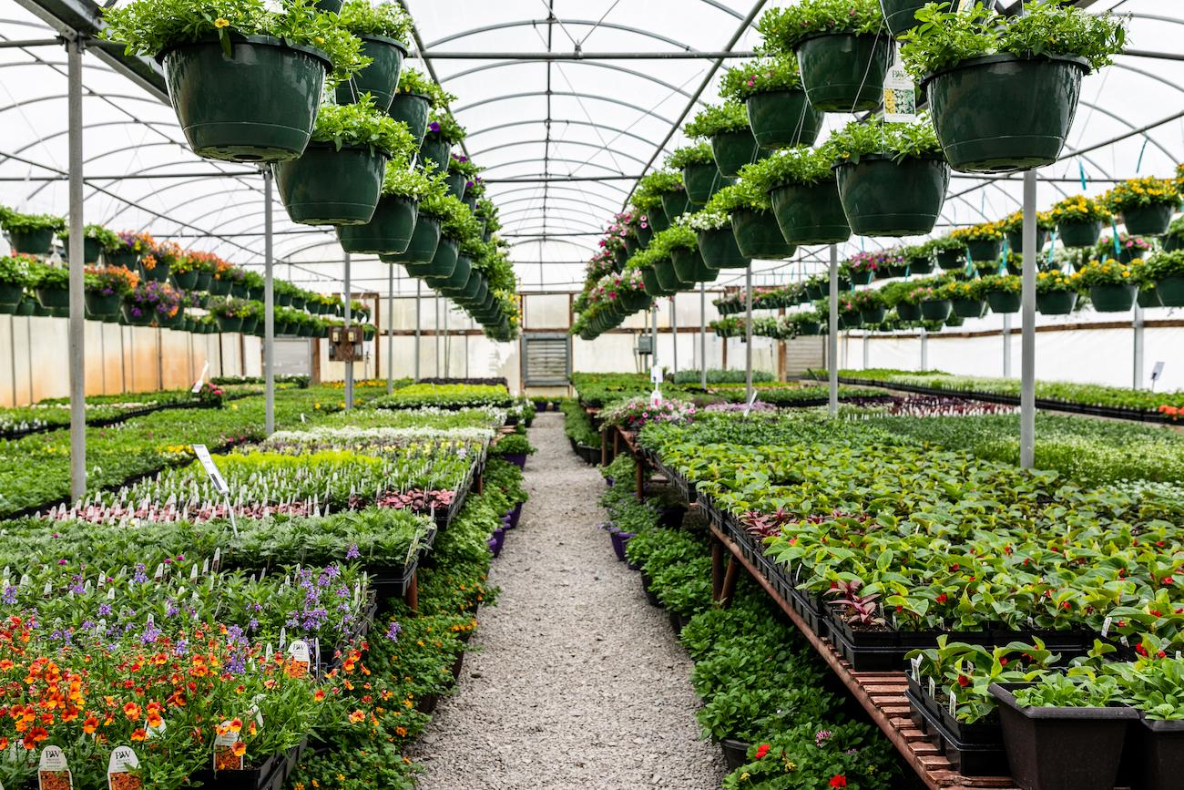 Grant's Farm & Greenhouses in Williamsburg has a plethora of plants to pick from, and they're having an open house on April 27th and 28th. There, you can get 20% off everything—the only time you can get a discount on some of these items all year long. ADDRESS: 5552 Bucktown Road (45176) / Image: Amy Elisabeth Spasoff // Published: 4.21.19