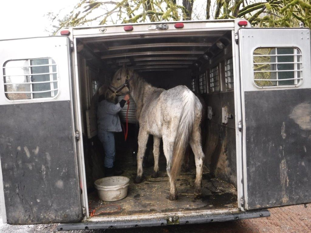 Lane County seized two horses in Mapleton and cited their owner with six counts of animal neglect Wednesday afternoon. (Lane County Animal Services photo)