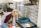 Whitfield Cattery 3.jpg
