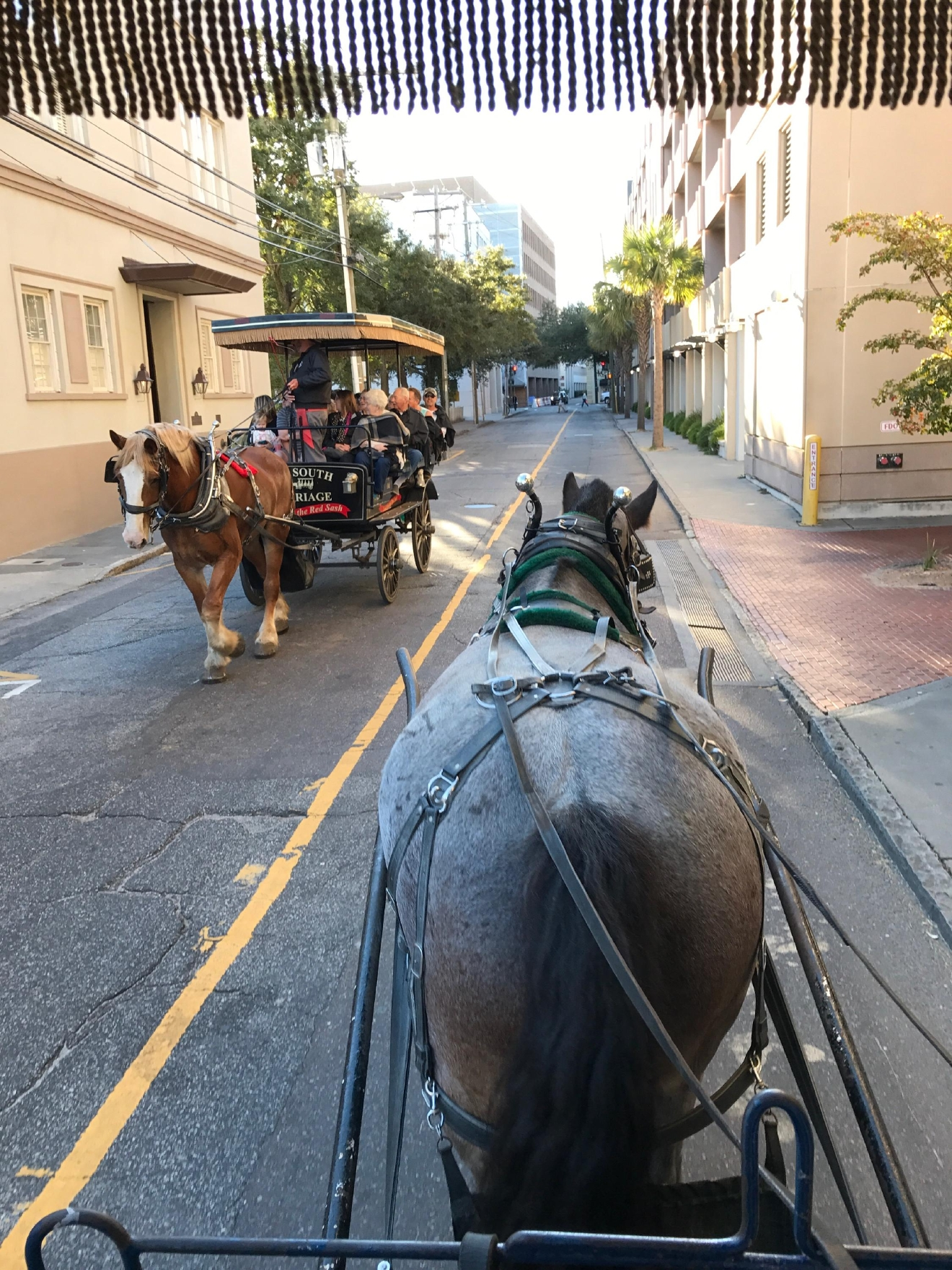 "Palmetto Carriage Ride  ""Travel and Leisure"" named Charleston, SC as the Most Romantic City in the United States and after traveling there we'd have to agree. From romantic carriage rides to rooftop bars and beautiful Magnolia Plantation and Gardens we found our 5 Most Romantic Spots in the most Romantic City. (Image: Joshua Lewis / Seattle Refined)"