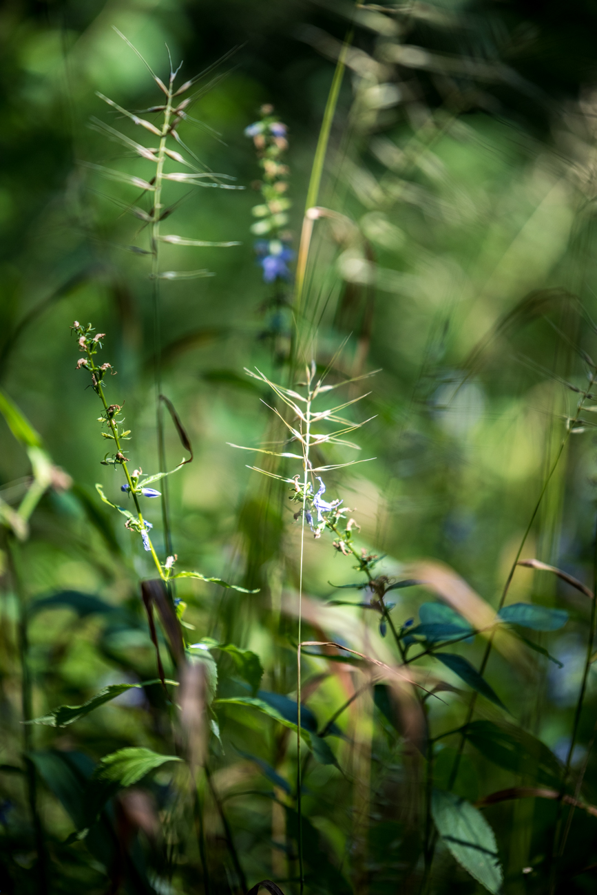 The restored nature preserve is heavily wooded and home to hundreds of plant and animal species. While hiking, you can expect to see some of the best native wildflowers in the area. / Image: Catherine Viox // Published: 8.7.20