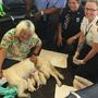 Service dog gives birth to litter of puppies while waiting for flight at Tampa airport