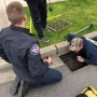 10 ducklings rescued from Sammamish storm drain