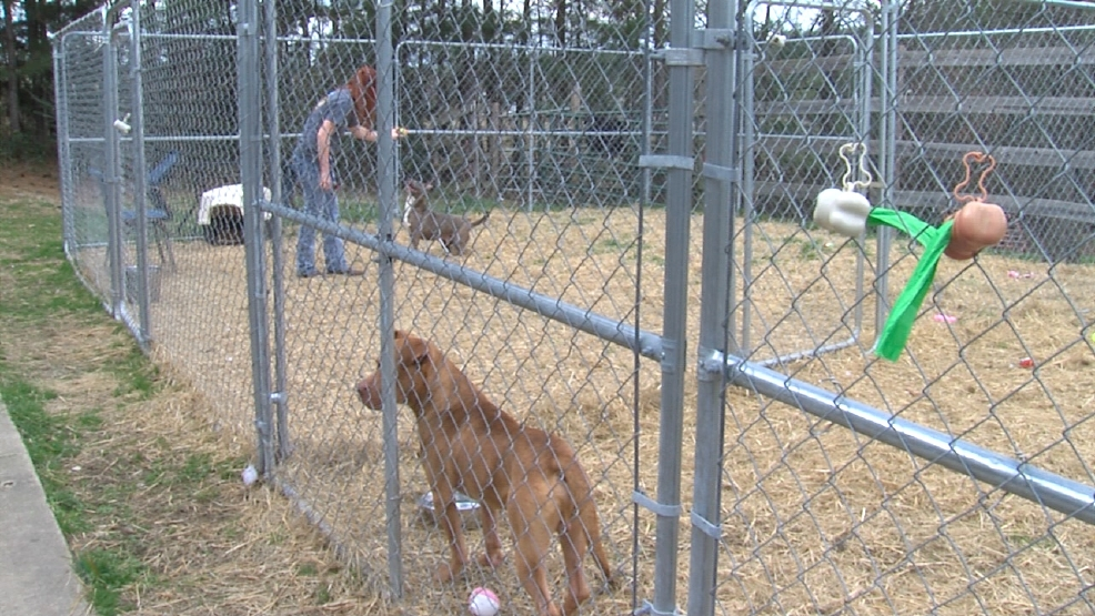 Low Cost Spay Neuter Certificates To Help Lower Amount Of Stray Animals