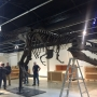 'Sue the T. Rex' assembled in less than a day
