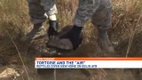 Tortoises move to Eglin for protection