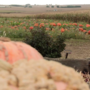 Hometown Farmer - Hoefling's Pumpkin Patch & Corn Maze