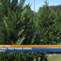 Baldwin County's largest Christmas tree farm opens