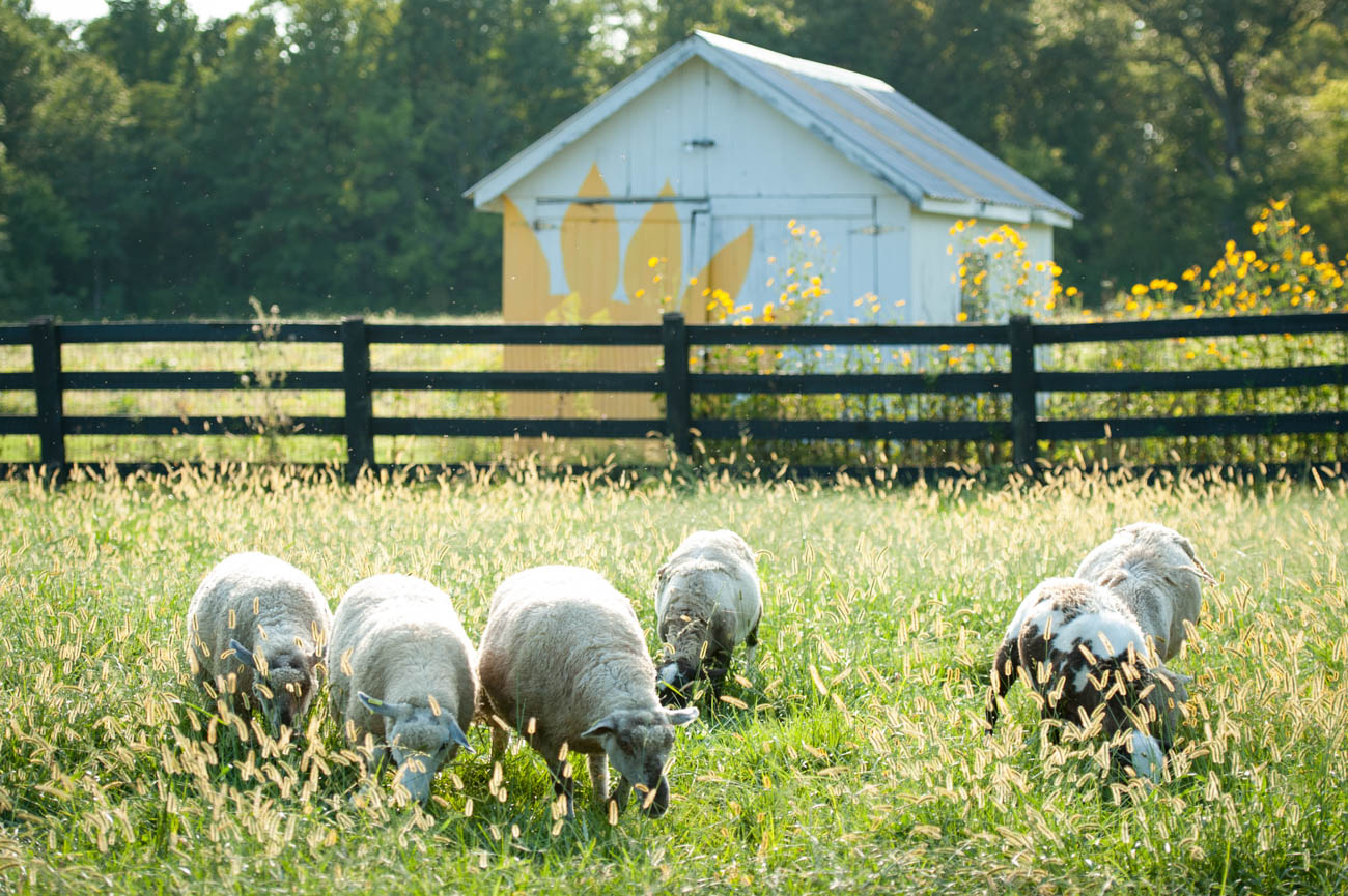 "Turner Farm is a 240-acre organic farm in Indian Hill that offers health-conscious cooking classes this fall called Teaching Kitchen. Participants will learn how to properly cook with organic, seasonal produce to get the best nutrients out of every bite. Robert Edmiston, Executive Director of Turner Farm, started the program to provide a source of nutritional education. He says, ""We recognize our responsibility to be proper stewards of the land, ourselves, and our community."" ADDRESS: 7400 Given Road (45243) / Image courtesy of Turner Farm // Published: 10.15.19"